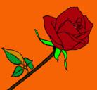 Dibujo Rosa pintado por diegocario