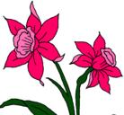 Dibujo Orquídea pintado por sol