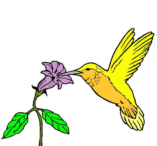 Worksheet. Dibujo de Colibr y una flor pintado por Turpial en Dibujosnet el