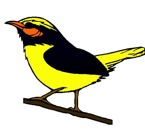 Worksheet. Dibujo de Pjaro silvestre pintado por Turpial en Dibujosnet el