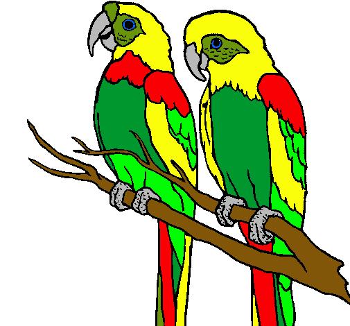 Dibujo de Loros pintado por Pericos en Dibujos.net el día 22-09-10 ...