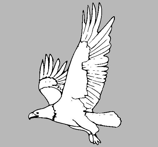Dibujo de guila volando pintado por Oscar456 en Dibujosnet el