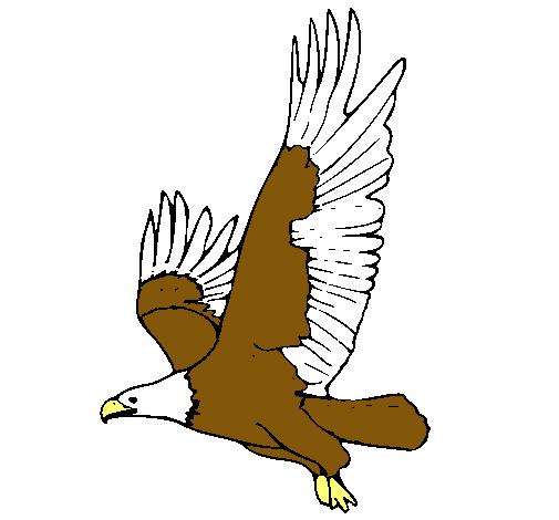 Dibujo de guila volando pintado por Loqui en Dibujosnet el da