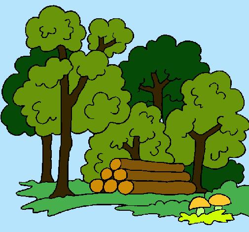 Resultat d'imatges de bosque dibujo