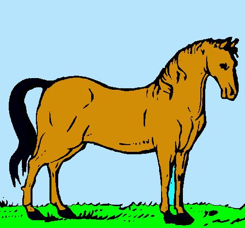 Dibujo de Caballo andaluz pintado por Caballo en Dibujosnet el