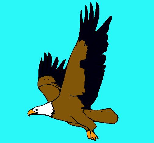 Dibujo de guila volando pintado por Zack en Dibujosnet el da 11
