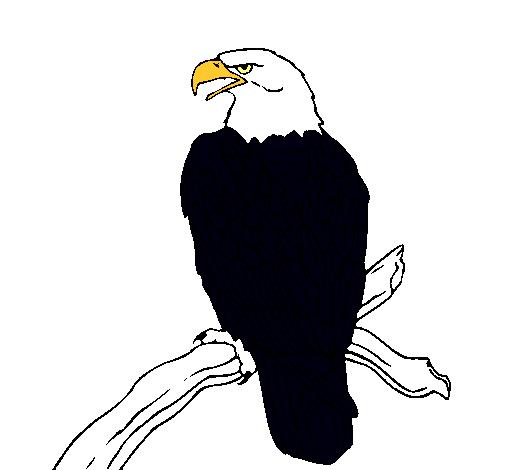 Dibujo Aguila. Dibujos By Felipe Romero. Cool Guila Calva Dibujo ...