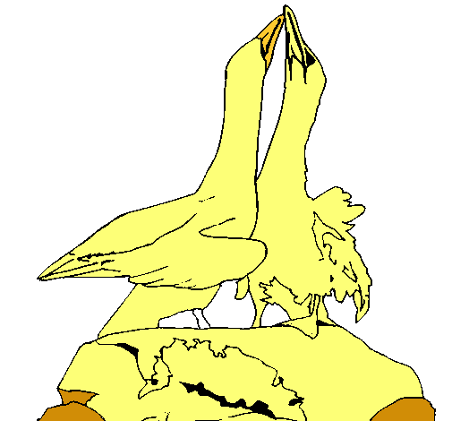 Patos en una roca