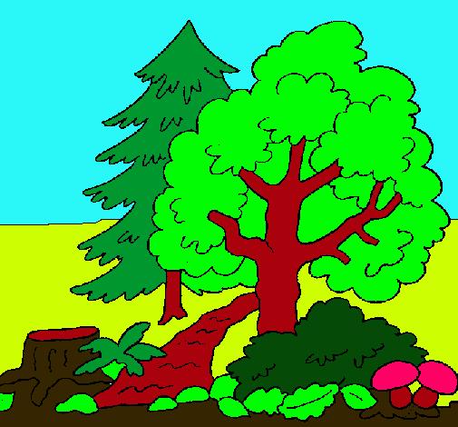 Dibujo de Bosque pintado por Naturaleza en Dibujosnet el da 31