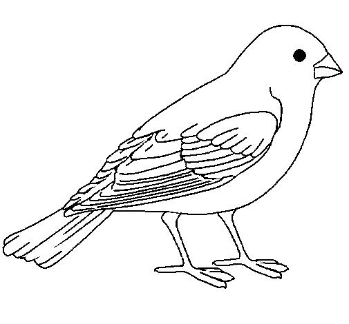 Worksheet. Dibujo de Gorrin pintado por Mencia en Dibujosnet el da 1101