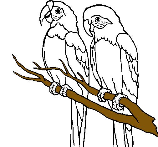 Dibujo de Loros pintado por Pabloski en Dibujosnet el da 3101