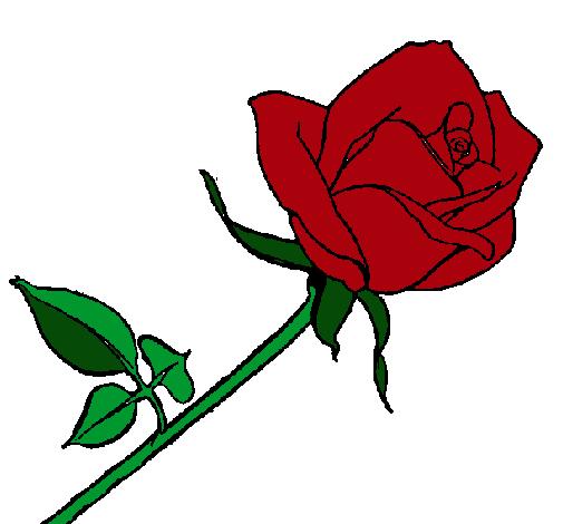 Dibujo de Rosa pintado por Rosita en Dibujos.net el día 09-02-11 a ...