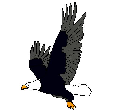 Dibujo de guila volando pintado por Balta en Dibujosnet el da