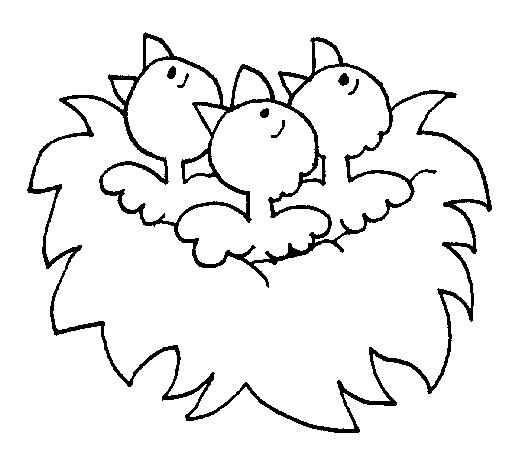 Nido de pájaritos