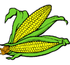 Dibujo Mazorca de maíz pintado por elote