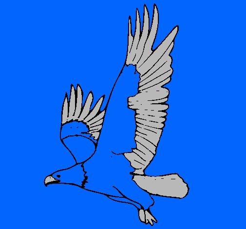 Dibujo de guila volando pintado por America en Dibujosnet el da