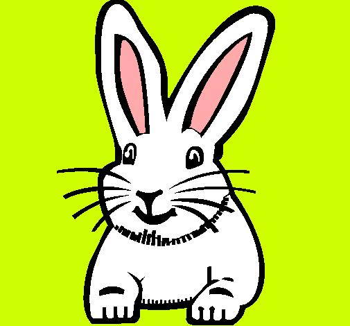 Dibujo de Conejo pintado por Ardilla en Dibujosnet el da 0704