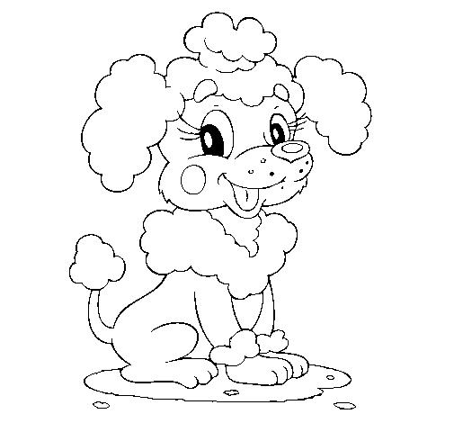 Dibujo de Caniche pintado por Coti en Dibujos.net el día 12-05-11 ...