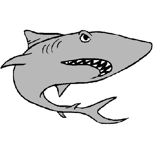 Resultado de imagen para dibujo de un tiburon