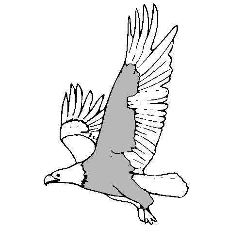 Dibujo de guila volando pintado por Vicky1 en Dibujosnet el da