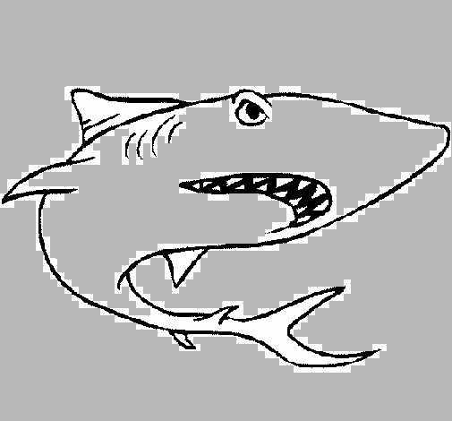 dibujo de tibur u00f3n pintado por jota en dibujos net el d u00eda