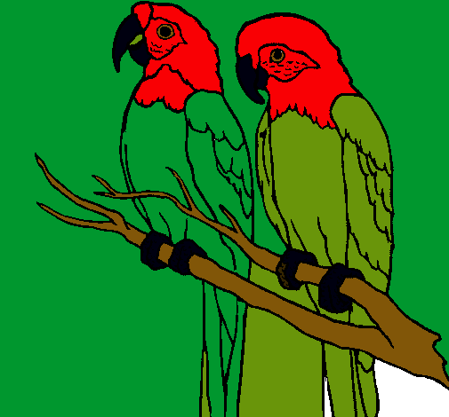 Dibujo de Loros pintado por Pericos en Dibujos.net el día 03-09-11 ...
