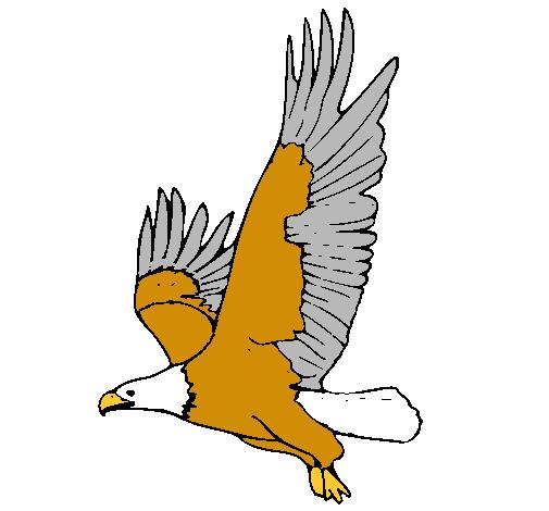 Dibujo de guila volando pintado por Awsdhcgfvfth en Dibujosnet