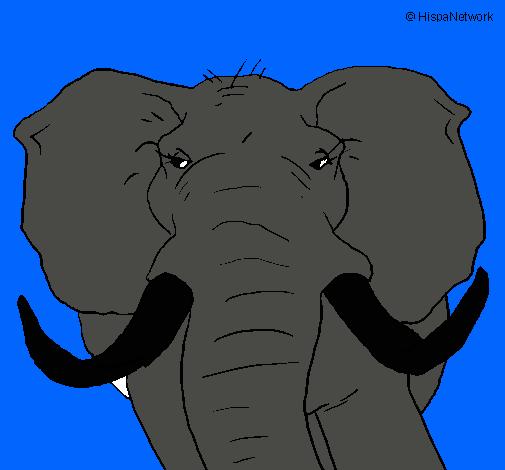 Dibujo de Elefante africano pintado por Elefante en Dibujos.net el