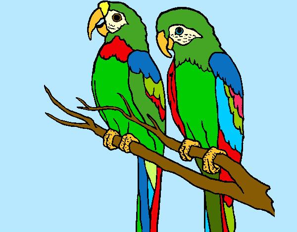 Dibujo de Un amor de Plumas pintado por Luruchi en Dibujosnet el