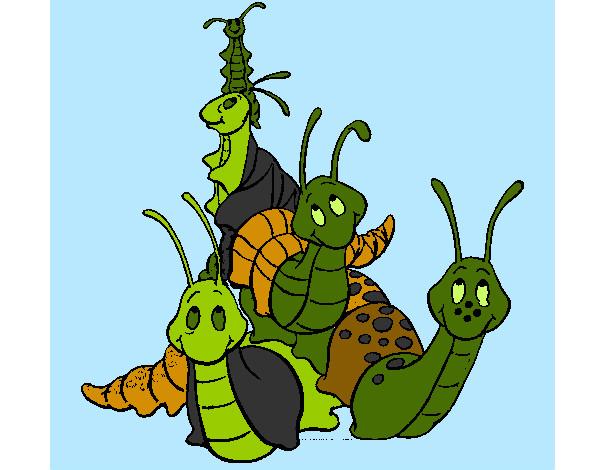 Grupo de insectos