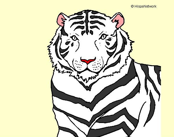 Dibujo De Tigre De Bengala Pintado Por Supermari En