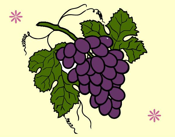 Dibujo de Racimo de uvas pintado por Sofiagarzo en Dibujos ...