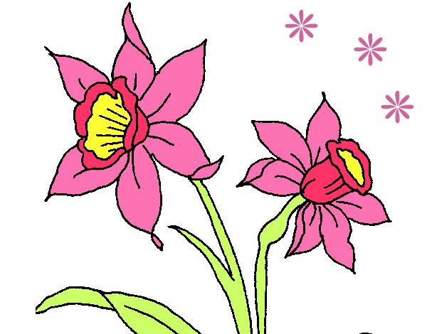 Dibujo de Orqudea pintado por Nataly97 en Dibujosnet el da 26