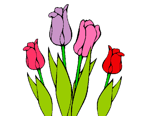 Imagenes De Dibujos De Flores A Color: Dibujo De Tulipanes Pintado Por Sarocha En Dibujos.net El