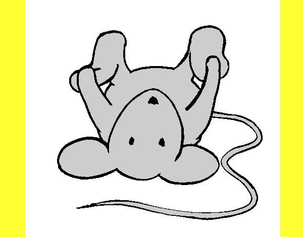 Dibujo De Rata Tumbada Pintado Por Elena2000 En Dibujos