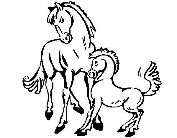 mi caballo