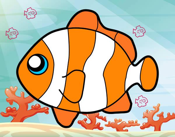 Dibujo de pez payaso pintado por Raquel99 en Dibujosnet el da 16