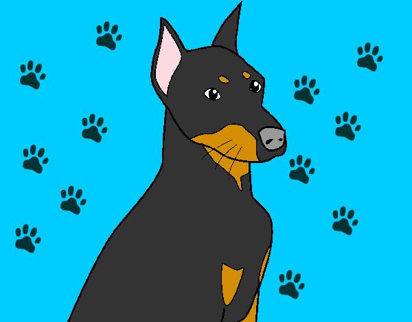 Dibujo De Doberman Pintado Por Perro En Dibujosnet El Día 02 11 12