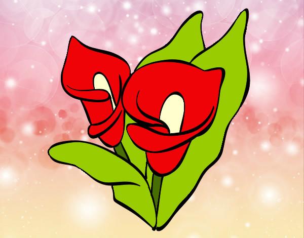 Flores En Dibujo A Color: Dibujo De FLOR DE LIRIO DE COLOR Pintado Por Delkis112 En