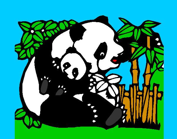 Pandas,tiernos Para,dibujar