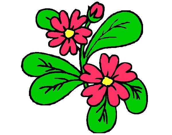 Dibujo de flor nerea pintado por Cecy2255 en Dibujosnet el da
