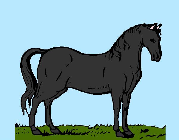 Dibujo de caballo andaluz de color alazan pintado por Gorrion en