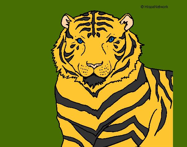 Dibujo De Tigre Con Fondo De Pastizal Pintado Por Gorrion En