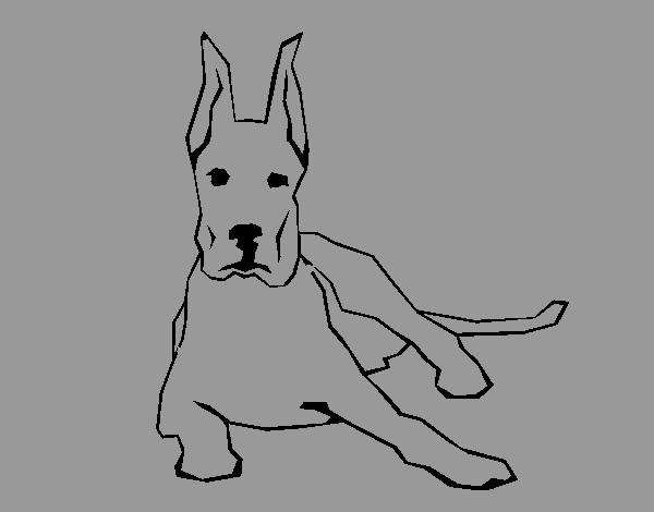 Dibujo de mi perro pintado por Ana2705 en Dibujosnet el da 0902