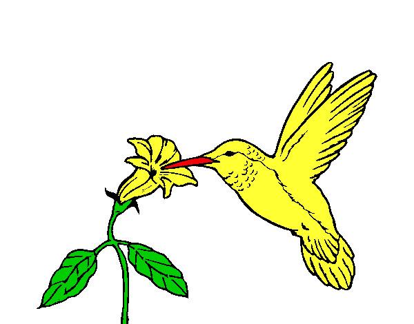 Dibujo De Colibrí Y Una Flor Para Colorear Dibujos Net ...
