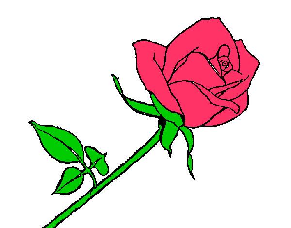 Dibujo de rosa pintado por Nickcris en Dibujosnet el da 040313