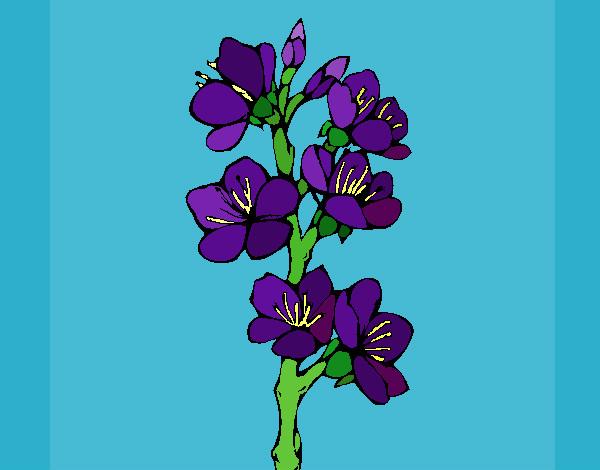 Dibujo de violeta pintado por Yuerina en Dibujosnet el da 2403