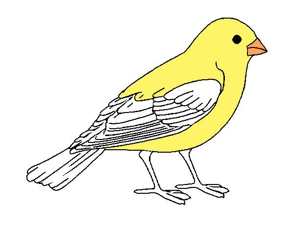 Dibujo de Gorrión pintado por Feer12 en Dibujos.net el día 14-06-13 ...