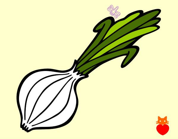 Dibujo de Cebolla tierna pintado por Queyla en Dibujosnet el da