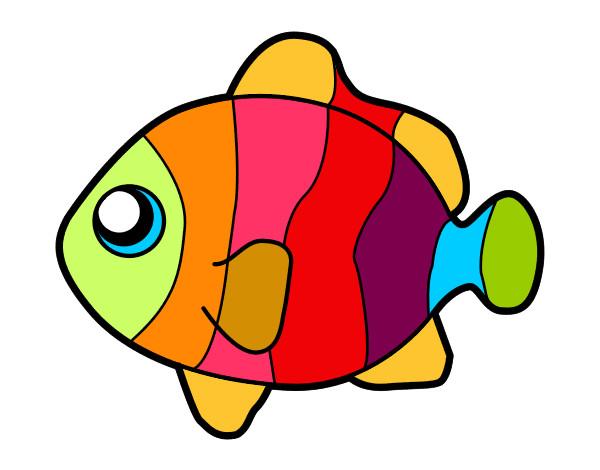 Dibujo de pez payaso pintado por teoalmeyra en for Poisson coil